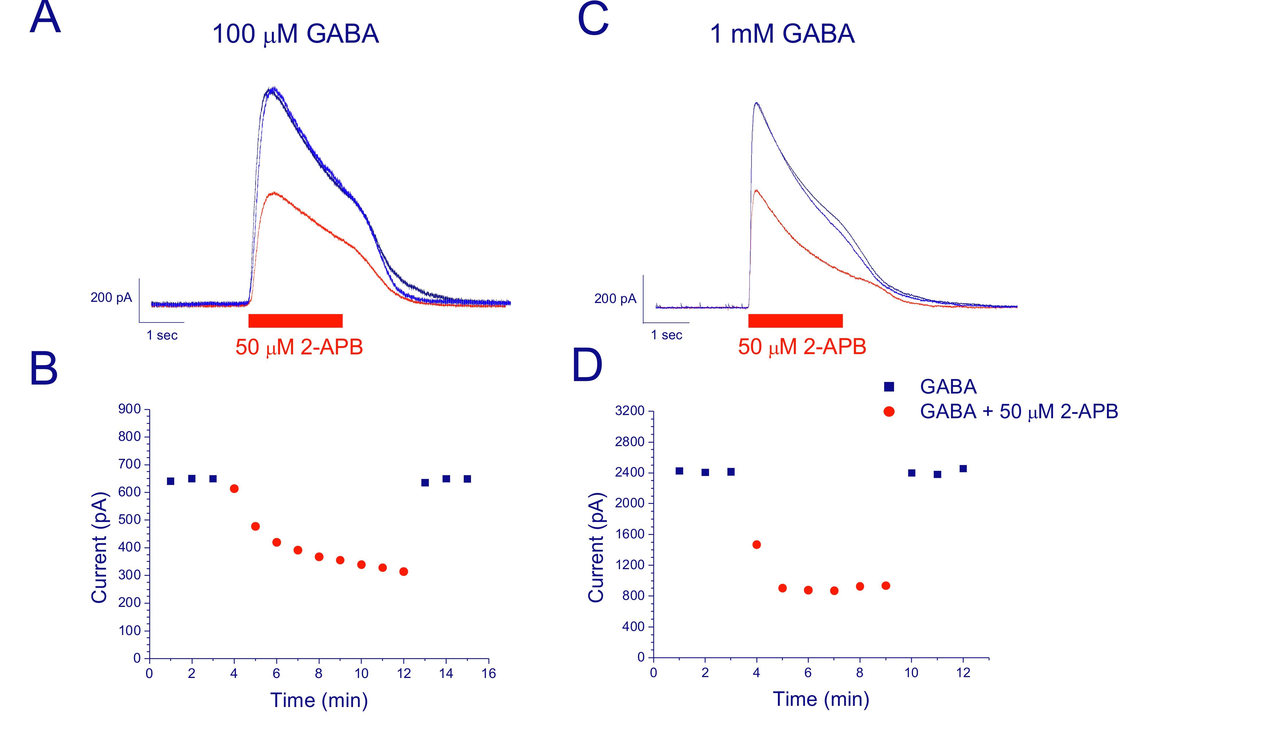 Figure 1. Blocking effect of 50 µM 2-APB on the currents evoked by repetitive application of GABA. (A) Raw currents recorded from an MPN neuron in response to 100 µM GABA only (black), in the presence of 50 µM 2-APB at the 5th consecutive application of 100 µM GABA (red) and after wash-out of 2-APB (blue). (B) Time course of the effect of 2-APB on peak current amplitude, for the cell in A (black: control; red: 2-APB).  (C) Raw currents recorded from an MPN neuron in response to 1.0 mM GABA only (black), in the presence of 50 µM 2-APB at the 5th consecutive application of 1.0 mM GABA (red) and after wash-out of 2-APB (blue). (D) Time course of the effect of 2-APB on peak current amplitude, for the cell in C (black: control; red: 2-APB). Currents were recorded at -34 mV.
