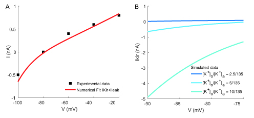 Figure 2. Fitting and simulations of the biophysical properties of Kir 4.1 channels. A) Illustration of current-voltage (IV) relationship of Kir 4.1 channels recorded experimentally (from Fig. 4 Ransom 95, black) and our corresponding numerical fit for [K+]o = 3 mM (red) and [K+]a = 135 mM, using equation (22) B) K+ dependence of the different simulated IV curves of IKir (Eq. 22) for [K+]o = 2.5, 5 or 10 mM.