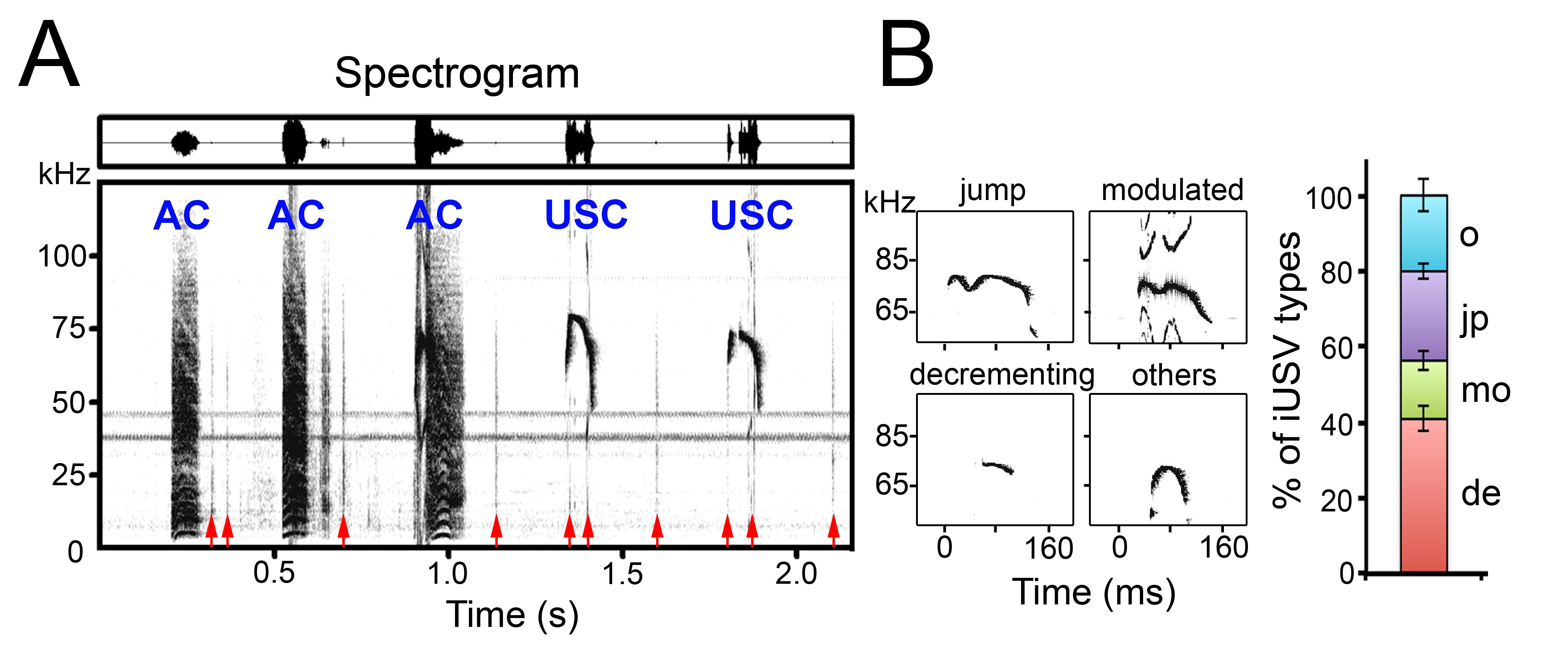 Figure 3. Vocal repertoire of neonatal mice. (A) Spectrogram (bottom) and waveform (top) traces illustrating audible (AC) and ultrasonic (USC) calls elicit by a newborn mice upon mechanical (touch) stimulation. In addition to audible and ultrasonic calls, newborn mice produce short non-vocal sounds called clicks (red arrows). (B) On the left, representative spectrograms of single ultrasonic calls produced during isolation. Note that ultrasonic calls are complex and can be classified according to their shapes and frequency in jump (jp), modulated (mo), decrementing (de) and other (o) calls. On the right, percentage of jump, modulated, decrementing and other ultrasonic calls in newborn mice isolated from the litter.